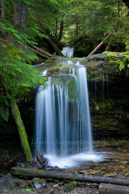 Idaho,North,Coeur d'Alene National Forest. Yellow Dog Creek drops over Fern Falls, a tributary to the Coeur d'Alene River.