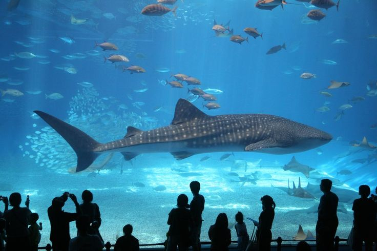 6. The Florida Aquarium, Florida: Kids will love the outdoor water park featuring a 24-foot pirate ship with water cannons and a wave tunnel. The aquarium also has more than 20,000 plants and animals, and interactive elements include photos with baby alligators. 7. Niagara Falls: Take a ride on Maid of the Mist or dine at the Top of the Falls Restaurant. The whole family will love the panoramic views. 8. Botanical Gardens: For picturesque family photos, head to your nearest botanical…