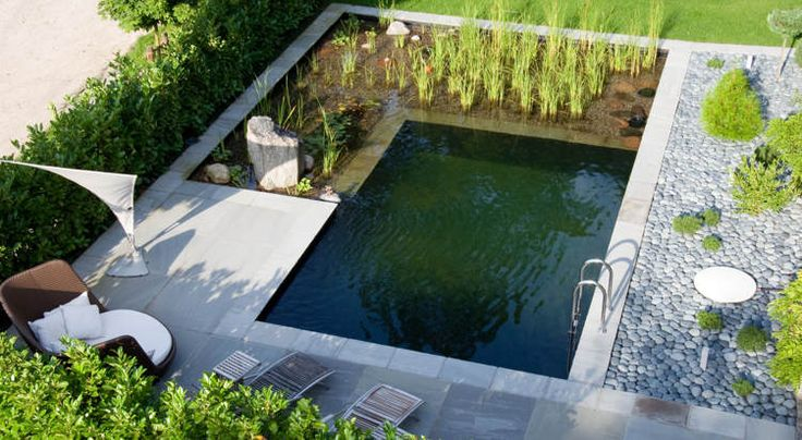 9 best koi koi ponds and natural pools images on for Koi pond natural swimming pool