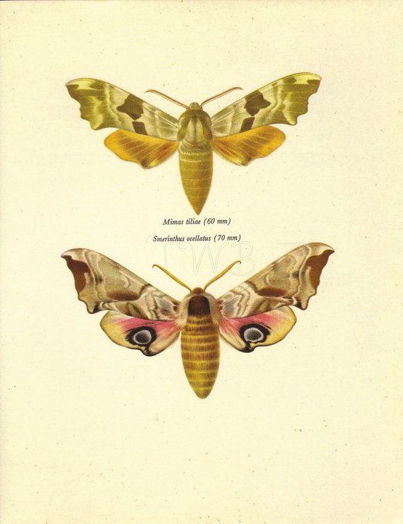 P Moth Decorator Moth Print, Butterfly ...