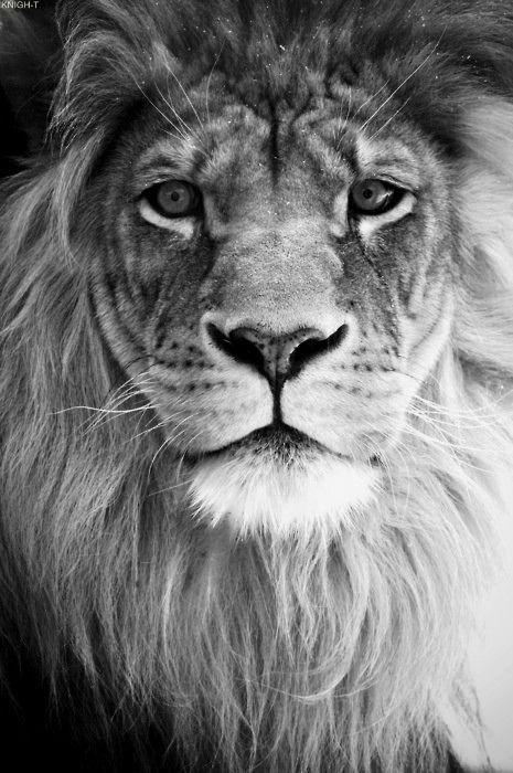Chaton ! #theking #animal