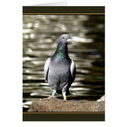 Pigeon Card - animal gift ideas animals and pets diy customize