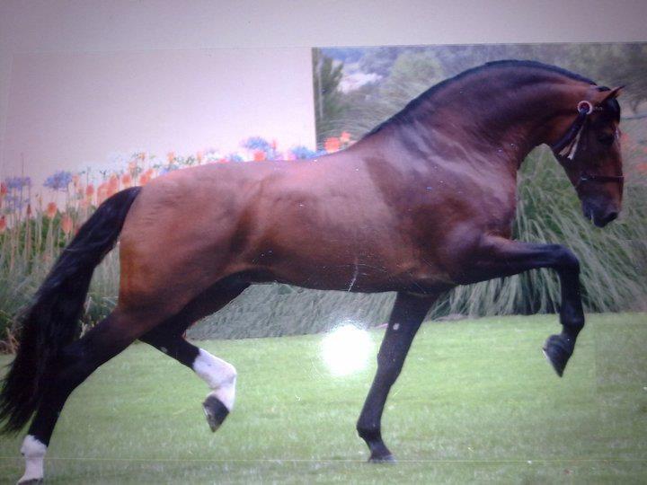 horseCall Hors, Beautiful Hors, Gorgeous Horses, Hors Pictures, Amazing Hors, Dressage Horses, Pretty Horses, Horses Pictures, Hors Ideas