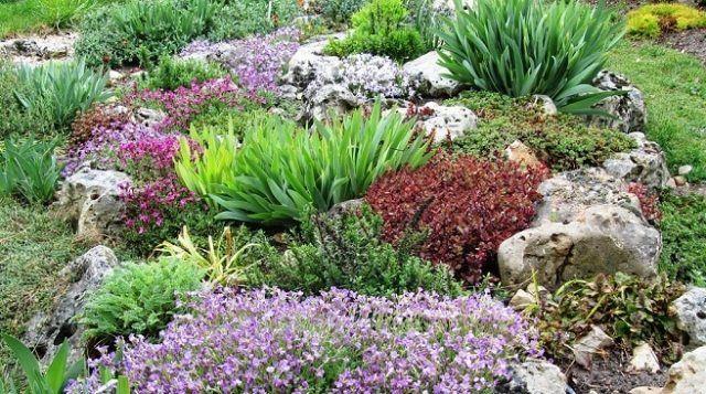 steingarten anlegen bepflanzen sorten farbtupfer bodendecker  garden