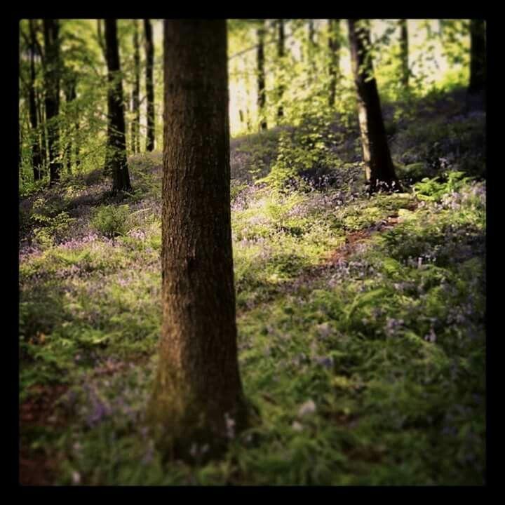 Portglenone forest. Northern Ireland. My photographs. #inkedandtwisted