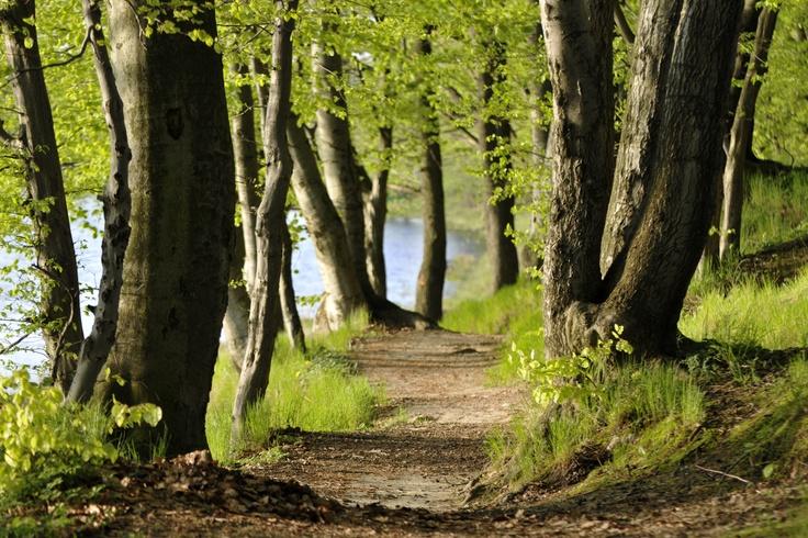 Wiosna nad J. Gałęźnym w Kościerzynie fot. Jolanta Bork / Spring at Gałeźne Lake in Costerina #spring #photography