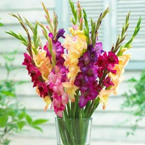 #Flower Delivery in #melbourne (#Shopping - Flower & #Gifts)