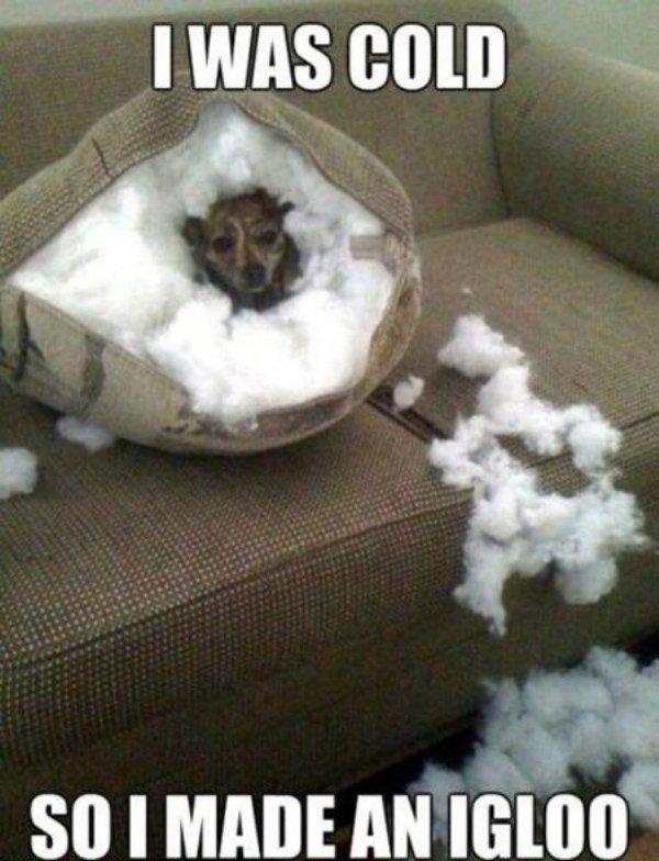 It Was Cold... not sure if I would laugh or scream!: Animals, Dogs, Pet, Funny Stuff, Funnies, Funny Animal