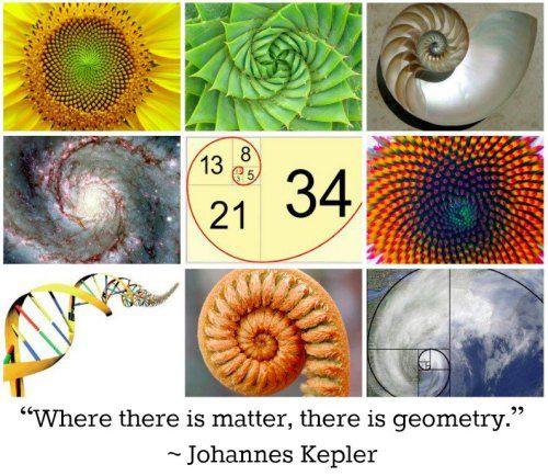 """Wordless Wednesday: More Fibonacci"" -- Original Source: IFLS"