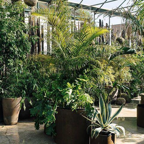 Lush palms await at Glasshaus Outside.