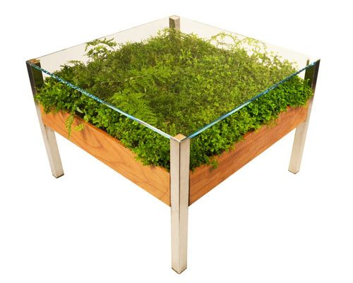 """The Living Table  by Habitat Horticulture, part of their new """"Ferniture"""" line, provides beautiful functional centerpieces for indoor and outdoor spaces, which add greenery without the need for a garden, or even wall space! It's handmade using 3/8 inch-thick tempered glass that can handle a 180 lb load per square foot and your choice of color, wood finish and the plants you'd like added."""