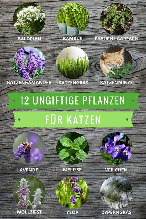 Ungiftige Pflanzen für Katzen: Diese Arten dürfen sogar gefressen werden – IsisQueenoftheNight .