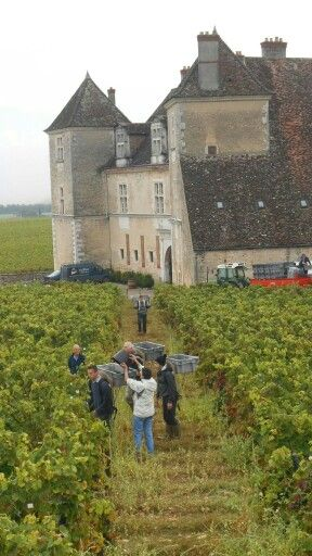 www.laurabradbury.com http://www.amazon.com/My-Grape-Escape-Running-vineyards/dp/0992158303/ref=sr_1_1?ie=UTF8&qid=1411248011&sr=8-1&keywords=my+grape+escape