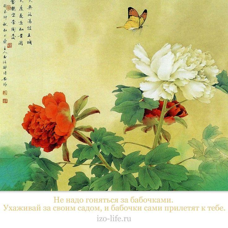 Не надо гоняться за бабочками. Ухаживай за садом, и бабочки сами прилетят к тебе!