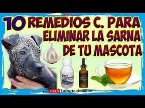 Como Curar La Sarna De Tu Perro 10 Remedios Caseros Para Eliminar La Sarna De Tu Mascota Youtube Remedios Caseros Para Perros Cura La Sarna Perros