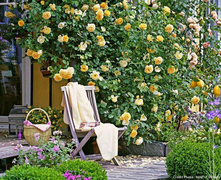 Ils ont un charme fou et ils sont parfumés. Irrésistibles rosiers anglais à planter au jardin.