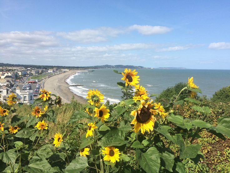 Sunflowers, Bray