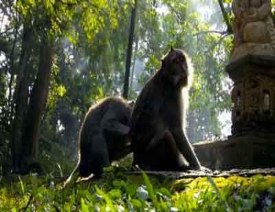 Ubud Monkey Forest Tour