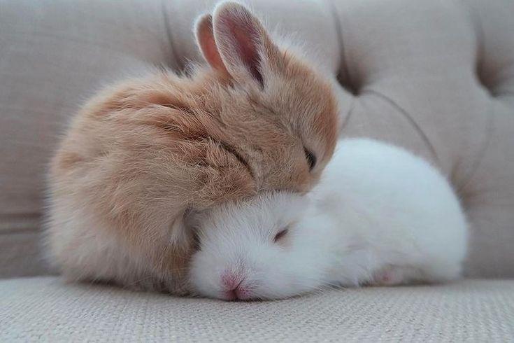 Два кролика сидят друг на друге картинки для фона