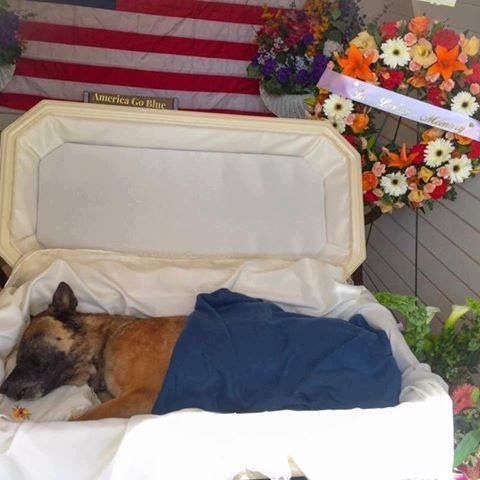 K-9 Nicky.Died in the line of fire protecting his officer