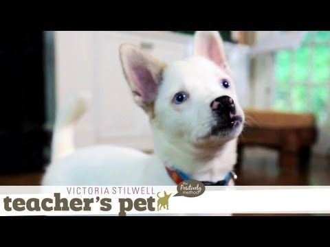 ...teach a puppy to go to the bathroom appropriately?   Potty Training a Puppy | Teacher's Pet With Victoria Stilwell