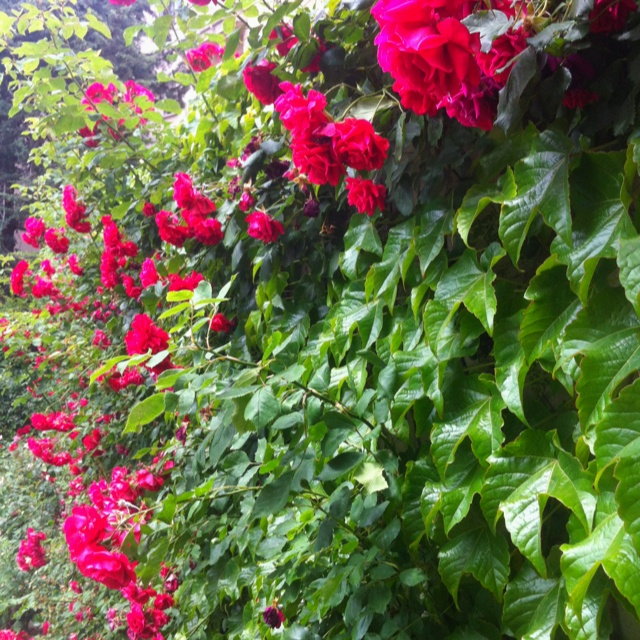 Flowers,plants and nature arround me