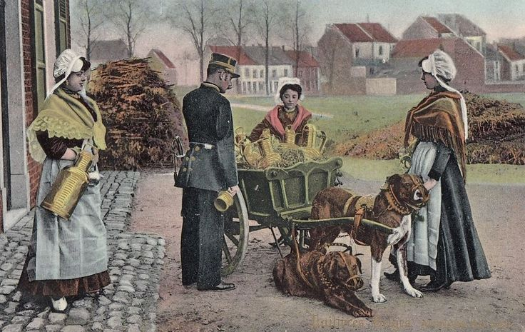 DOG:  Belgian Dog Milk Cart-Analyse du Lait-VAN CORTENBERGH