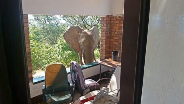 Wild Bull Elephant Was Standing Right Outside Their House. Then They Saw This On His Shoulder…