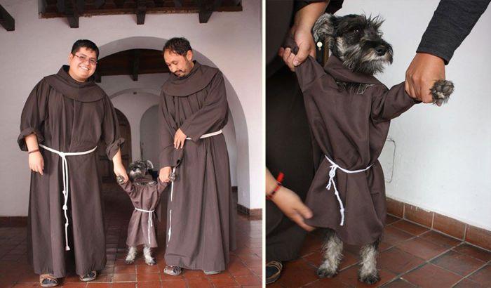 Вокруг света: Самый необычный монах: обычная дворняга стала послушником в католическом монастыре http://kleinburd.ru/news/vokrug-sveta-samyj-neobychnyj-monax-obychnaya-dvornyaga-stala-poslushnikom-v-katolicheskom-monastyre/