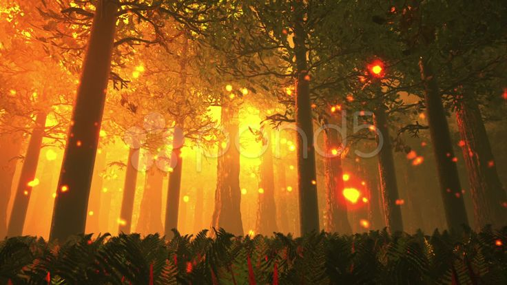Deep Forest Fairy Tale Scene Fireflies 3D render - Stock Footage | by boscorelli http://www.pond5.com/stock-footage/14798278/deep-forest-fairy-tale-scene-fireflies-3d-render.html?ref=boscorelli