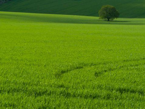 Frissen vágott fű (Freshly Cut Grass)