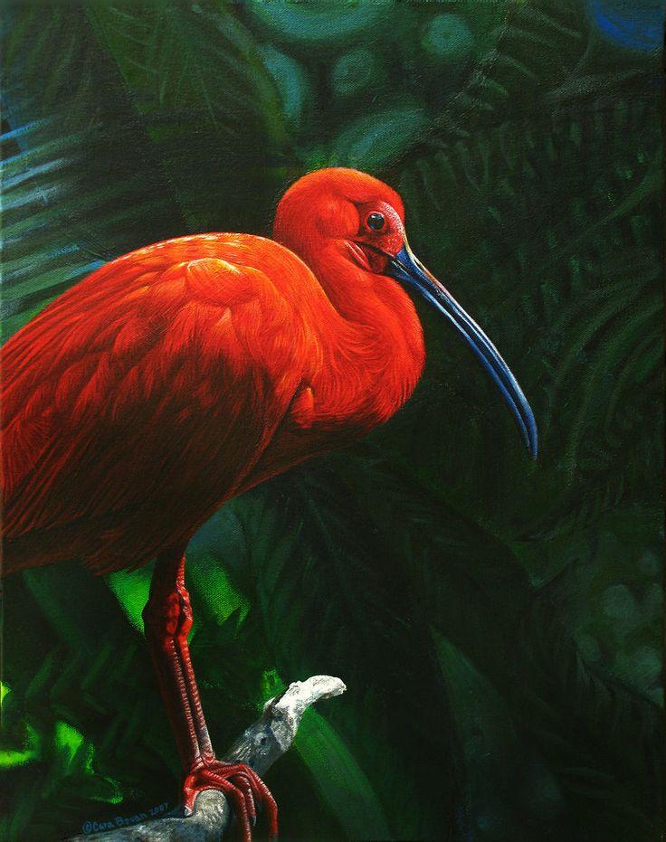 Rainforest Ruby by ART-fromthe-HEART.deviantart.com on @deviantART ( a painting of a Scarlet Ibis)