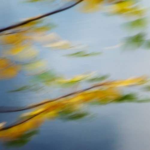 fall yellow 151sq