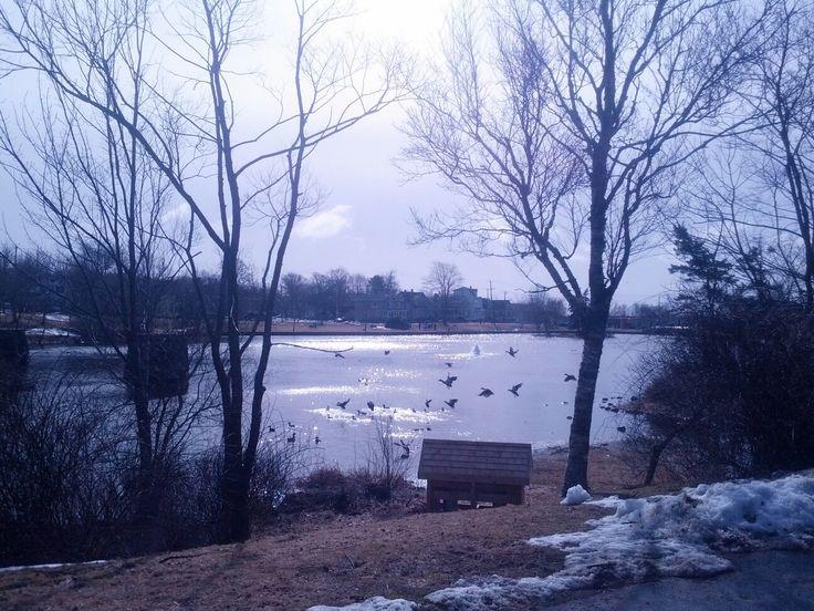 The Pond. Dartmouth,