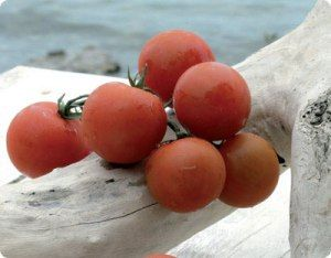 Visit Greece | Santorini cuisine, Cherry tomatoes