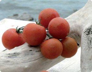 Visit Greece   Santorini cuisine, Cherry tomatoes