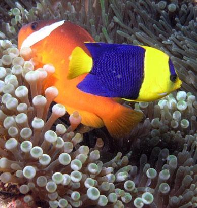 Snorkelling off Fiji