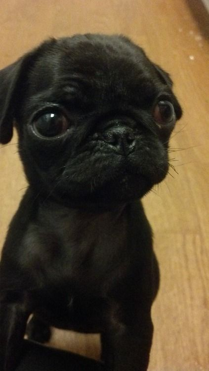 """Pug  __ I can give you """"CASHBack"""" from your Purchases (Walmart, Groupon, Apple, Tesco, Boots, Asda Gifts, Argos, Best Buy, Macy's, etc.. See my Profile <@jurale13> for Details)."""