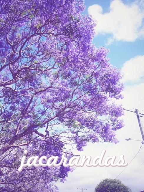 Jacarandas!