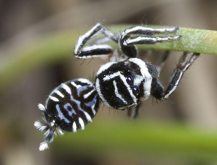 new spiders 2