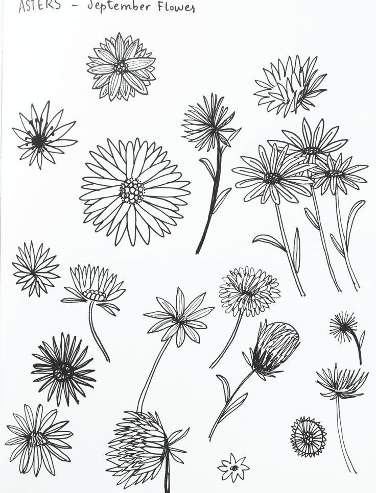 Aster Flower Sketches By Amanda Gomes Delightedco Com Amanda Aster Delightedcocom Flower Gomes Sketc In 2020 Birth Flower Tattoos Aster Tattoo Flower Sketches