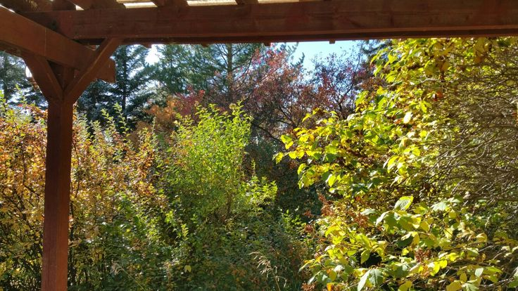 View from our gazebo - next year an outdoor room with fireplace - or a beginning!