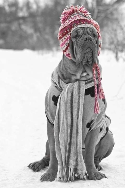 ~ looking fashionable and staying warm on this nasty January day! ~