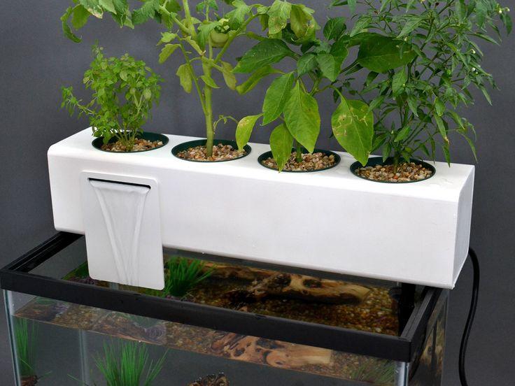 kit-aquaponie-aquarium                                                       …