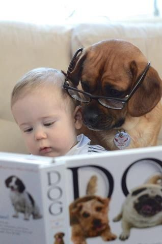 Read me this part again; about how great boxer dogs are as a baby's best friend......