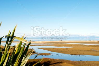 New Zealand Flax with distant Seascape Royalty Free Stock Photo