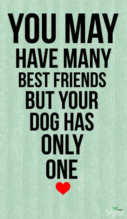 Dogs Are Friends For Life Our Pet S True Love O