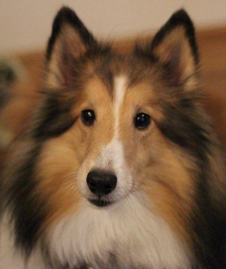 Savannah Dog Adoption