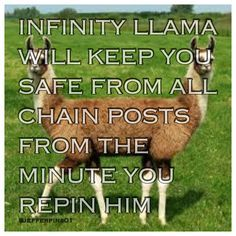 "I already have immunity cat, but now I can confuse people by saying ""infinity llama!"""