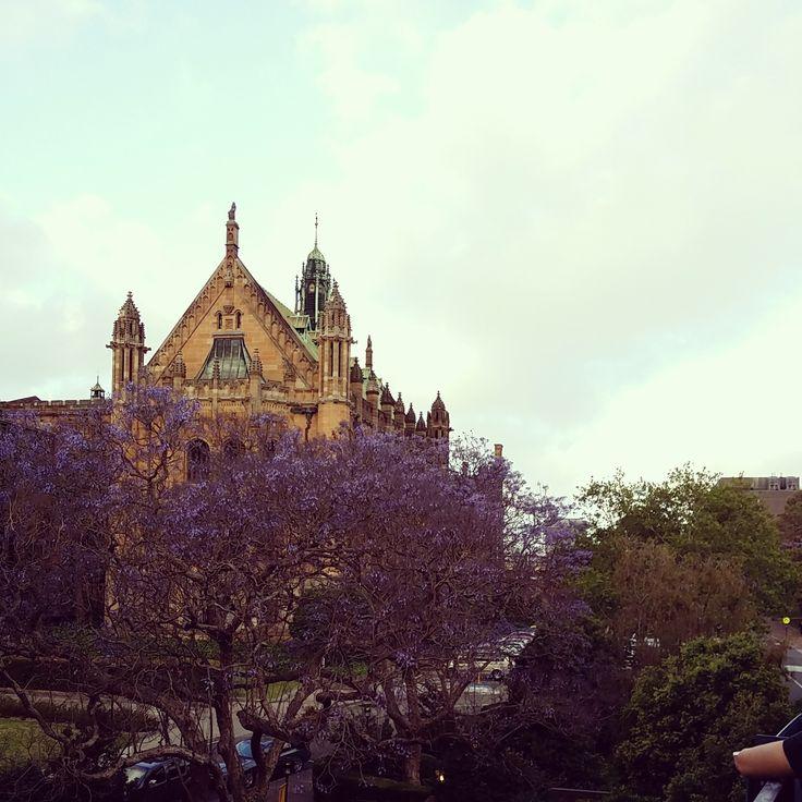 The quadrangle at the University of Sydney.